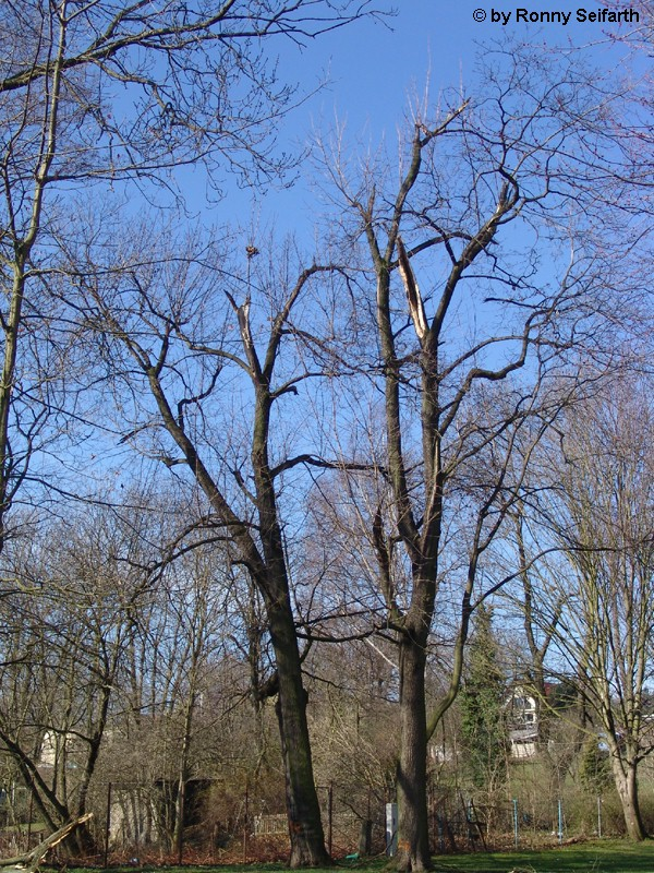 Altenburg 4
